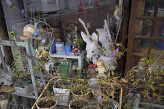 The world of a chaos / Osaka City JAPAN (mokuu) Tags: chaos 混沌 donkey ロバ doll 人形 flowerpot 植木鉢 plasticbottle ペットボトル fxg