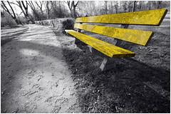 Week02 - opdracht 204 geel (30day Challenge) Tags: park bos geel yellow bank bankje buiten nederland rotterdam opdracht204