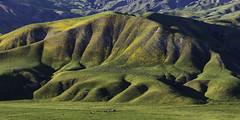 California Foothills (pixelmama) Tags: california diablorange highway198 johnmcveighjrmemorialhighway march pixelmama salinasrivervalley spring