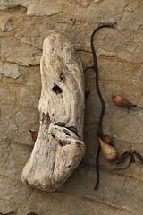driftwood, Pt. Lobos State Reserve, CA 04-12-17 (Kent Van Vuren) Tags: driftwood