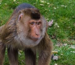Burgers Zoo-1 (Louis Swart) Tags: dierenpark