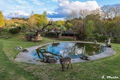 Natural Park in Lugo (Spain). Parque natural en Lugo (Spain) (A. Muiña) Tags: parquenatural agua animals animales cielo heaven naturaleza water nature nikond800 landscape paisaje