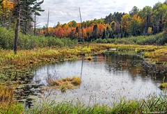 A pond in the Ottawa National Forest near Bond Falls in Michigan (PhotosToArtByMike) Tags: ottawanationalforest michigan mi upperpeninsulaofmichigan paulding upperpeninsula pond up uppermichigan autumn autumnleaves bondfalls