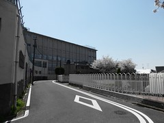 (Human-Faced Bun w/ Honey Pudding) Tags: street road curve bend fence cherry blossom blue sky wall