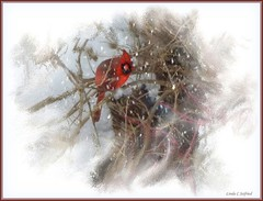 Is it almost Spring? (edenseekr) Tags: cardinal snowstorm nywinter photopainting