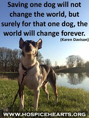 Saving one dog... (Hospice Hearts) Tags: hospicehearts nonprofit animalrescue wwwhospiceheartsorg champaign urbana illinois il dogs dog cat cats foster feline felines foreverhome family adopt adoptdontshop volunteer donate 501c3475247265 quotation quote quotes community centralillinois