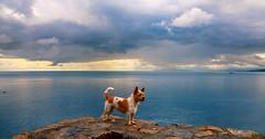 Paty: En un mar azul / Paty: In a blue sea (josemanuelvaquera) Tags: atardeceres sunsets mar sea ceuta paty mascotas nubes clouds cielos heavens