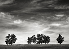 A Row of Trees along the Redtail Loop Trail (StefanB) Tags: 1235mm 2017 arastraderopreserve bw california em5 geotag hiking monochrome outdoor tree treescape