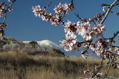 Primavera en el Moncayo (Luis Sanz) Tags: espaa flores primavera canon eos zaragoza aragon 1785 buste almendros 50d