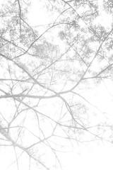 Bogota, 2014. (Joshua Pazos) Tags: blackandwhite stilllife blanco sol calle colombia bogota y negro manos pizza cielo candelaria oro rejas museodeloro aprobado lacandelaria callebogota moserrate colombra