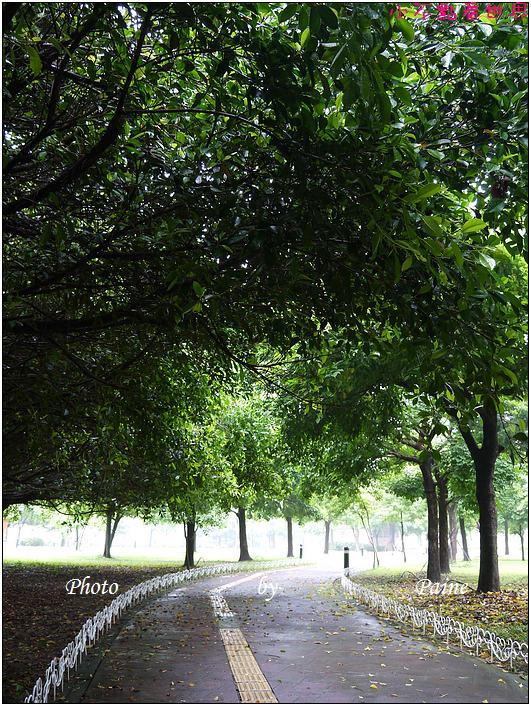 大溪埔頂公園 (14).JPG