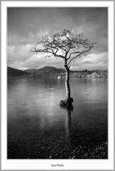 The Milarochy Tree (flatfoot471) Tags: winter rural landscape scotland lochlomond stirlingshire millarochybay
