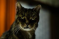 Moritz + (-BigM-) Tags: cat photography fotografie explore katze kater bigm