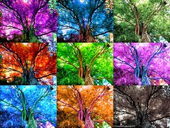 Colorful Foliage Whispers --- Photomontage 2 (x9) (Cloudwhisperer67) Tags: world wood blue autumn trees friends summer sky sun paris france tree green eye art love nature