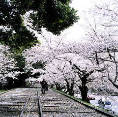 94730010 (Darjeeling_Days) Tags: hasselblad 京都 中判 プロビア