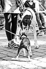Stay Rebel Festival Chemnitz 31.05.2014 (Tom Berger LBF) Tags: park music dog festival rock canon rebel 50mm drive am punk dancing drum bass live 05 n kopp bulldog mai marx karl usm musik der 31 450 metalcore stay chemnitz 2014 antifa opfer odf nischel faschisten meksound tberger