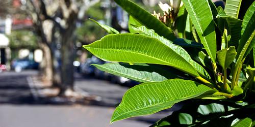 Leafy thing