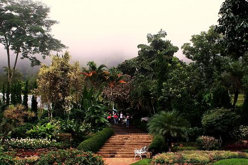 Chiang Mai Flora.