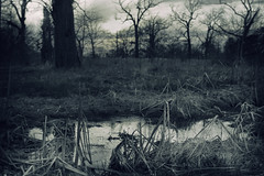 always drawn to this wet and lonely place (amy buxton) Tags: photography spring photographer stlouis wetlands forestpark amybuxton
