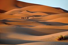 Caravana de guiris......las caravanas ya no son lo que eran. (Victoria.....a secas.) Tags: desert dunes explore desierto marruecos camels dunas shara camellos