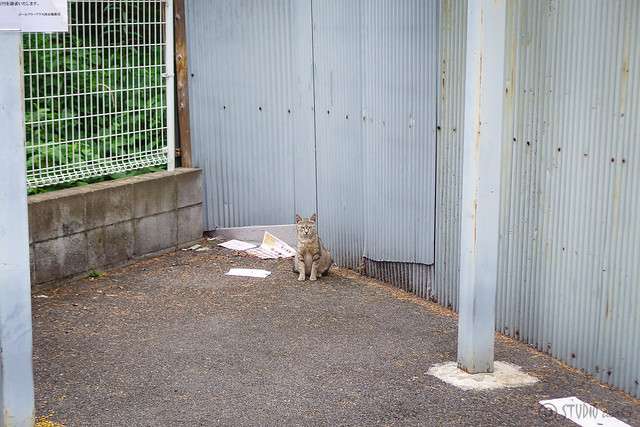 Today's Cat@2014-06-12