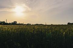 Uelzen wheat fields (ludwig.troller) Tags: sunset sun field germany landscape deutschland nikon wheat sigma flare uelzen n