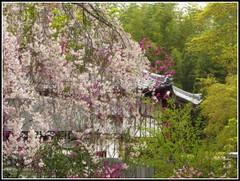 Garden of a Hundred Flowers (Taking5) Tags: flower japan temple kyoto arashiyama zen cherryblossom sakura tenryuji