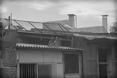 Palomarr III (www.luxetpix.com) Tags: blanco y negro m42 zenit palomas montevideo palomar 2870mm