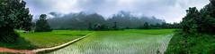 Rice Paddy & Mountains Vang Vieng Panorama (Parker Vandermeer) Tags: panorama southeastasia rice cloudy laos ricepaddy vangvieng summer2014
