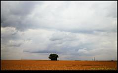 140628-1726-EOSM.jpg (hopeless128) Tags: france clouds eurotrip lonetree 2014 poitoucharentes soletree filmemulation nanteuilenvalle