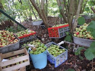 appelstalling
