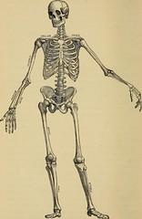 Anglų lietuvių žodynas. Žodis spinal column reiškia stuburas lietuviškai.