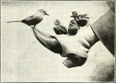 Anglų lietuvių žodynas. Žodis cherry-stone reiškia n vyšnios kauliukas lietuviškai.