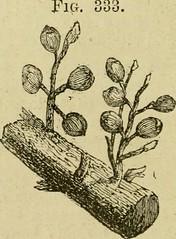 Anglų lietuvių žodynas. Žodis palmatisect reiškia Palmatistek lietuviškai.