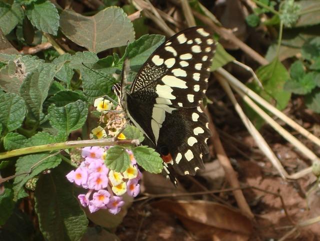 Butterfly2 (1024x770)