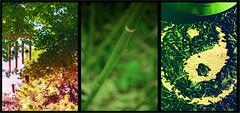 (100vies!) Tags: green tea peaceful vert bamboo yinyang bambou calme th