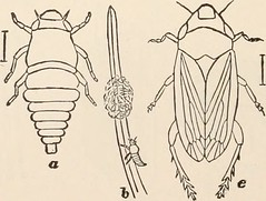 Anglų lietuvių žodynas. Žodis family cercopidae reiškia šeimos cercopidae lietuviškai.