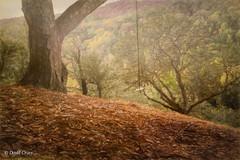The Rope Swing (buffdawgus) Tags: california canon5dmarkiii canonef24105mmf4lisusm landscape lightroom5 oaktree portolavalley sanmateocounty topazsw ropeswing