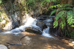 Small waterfall in the Dandenong, Victoria, Australie (martine_vise) Tags: waterfall forest river greenery victoria australia dandenong reflections australiatrip travel travelinaustralia fern light sunlight intheforest