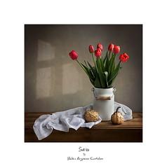 ............❀❀❀............ (.... belargcastel ....) Tags: still bodegón stilllife flores flowers tulipanes tulipan tulip calabaza pumpkin light belargcastel belénargüesocastelos españa spain galicia textile