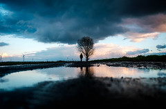 Under the Tree (Dan-Schneider) Tags: streetphotography street silhouette clouds sky reflection puddle colour light sunset human