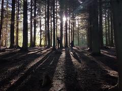 Hiding in the Woods  1/30 (rmrayner) Tags: donaldtrumphidinginthewoods aprilfools 1april hss sliderssunday trees scary potus