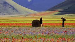 Attese premiate II (Gio_guarda_le_Stelle) Tags: castelluccio landscape dreamland flowers italy beauty