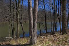 The Beginning Of The Season (Aquamarine Images) Tags: trees springtrees lakesandtrees lakes blueskies spring aquamarineimages