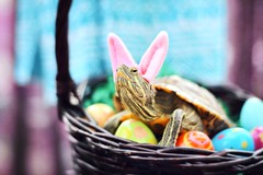 Side-eye Easter Bunny (City Turtles) Tags: explore feature flickr nyc bokeh blur pink basket eggs color colorful easter bunny purple reptile petphotography photography camera canon cute pet animal photo turtle
