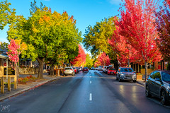 Main street of Hahndorf in Autumn (spotandshoot.com) Tags: 2017 accommodation adelaide april australia hahndorf handorf main south antique area autumn beautiful building cafe destination exterior german green heritage hills historical holiday iconic old outside popular red restaurant season settlement shop street structure tourism tourist town tradition transport unique vacation views village vintage yellow sa