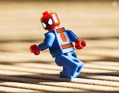 Spiderman Dash (jezbags) Tags: lego legos toys toy marvel spiderman dash minifigure minifigures macro macrophotography macrodreams macrolego canon60d canon 60d 100mm closeup upclose homecoming sense spider