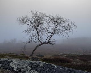 Berk - Birch