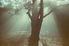 (Román__PG) Tags: light magic fog asturias film kodacolor vr100 expired