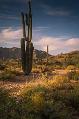 20170409-DSC_5234 (lilnjn) Tags: arizona southwestunitedstates travel unitedstates whitetank